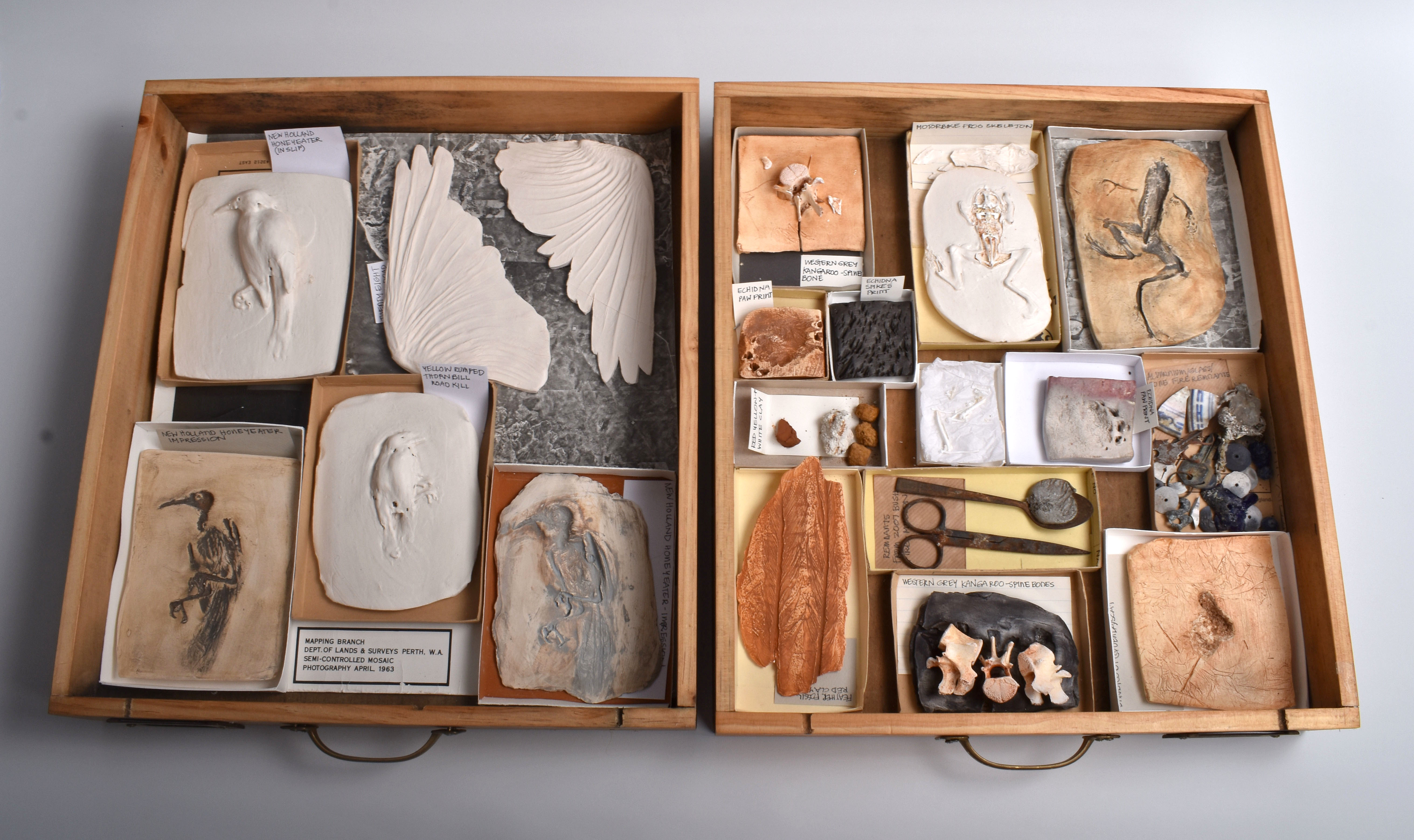 Specimen Drawers A & B